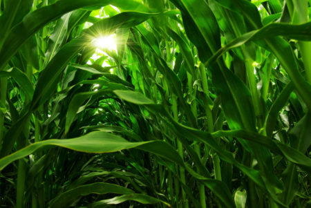Monsanto GMO – What's Our Trust Level for the GMO Pioneers?