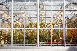 Monsanto in Tucson – GMO Truth Podcast #10